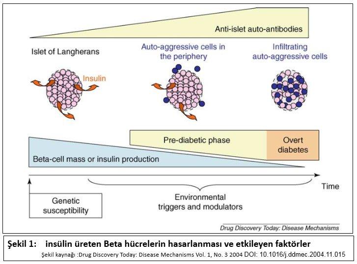 insülin ÜRETEN-beta
