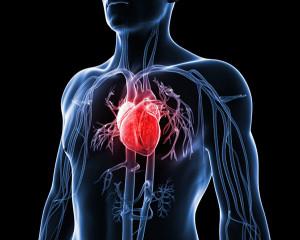 kalp yetmezliği ve kök hücre, kök hücre, kordon kanı, kalp yetmezliği